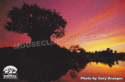 Tree of Life at dusk, Walt Disney World postcard photo by Gary Krueger