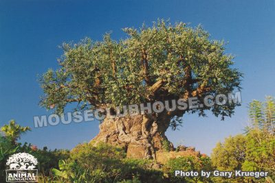 Tree of Life in Disney's Animal Kingdom, Walt Disney World postcard photo by Gary Krueger